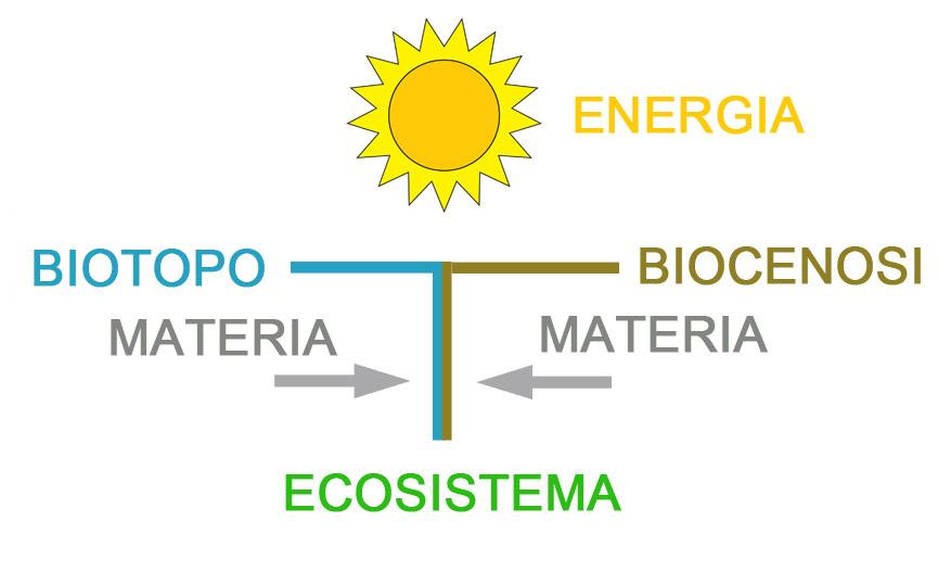 schema ecosistema BENE.jpg