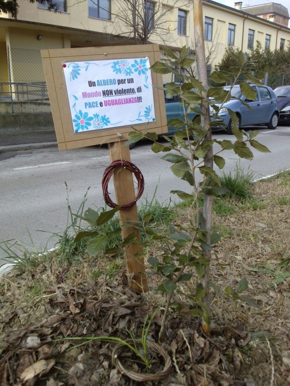 albero pace ortisti di strada.jpg