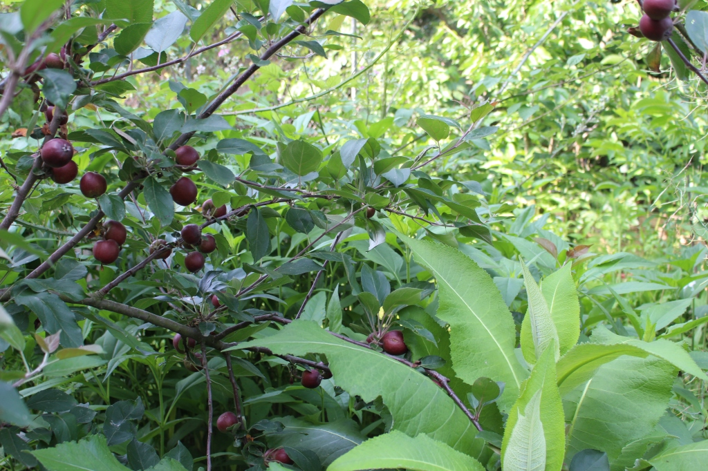 food forest.JPG